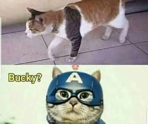 Avengers, captain america, and cat image