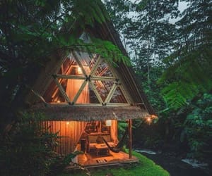 nature, cozy, and forest image