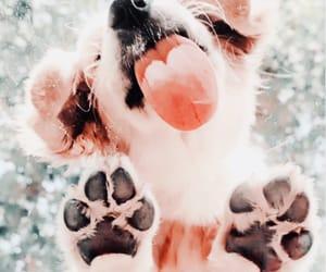 adorable, dog, and golden retriever image