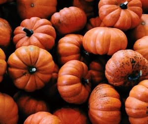 aesthetics, fall, and autumn image
