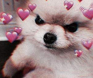 dog, meme, and cute image