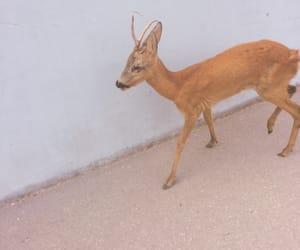 aesthetic, animal, and deer image
