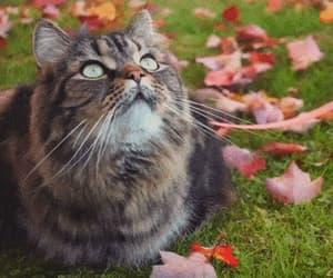 Animal kingdom, autumn, and gif image