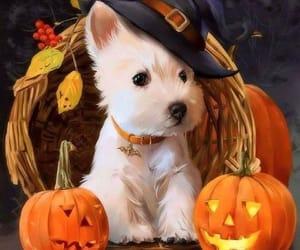 dog and autumn image