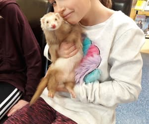 animal, ferret, and pet image