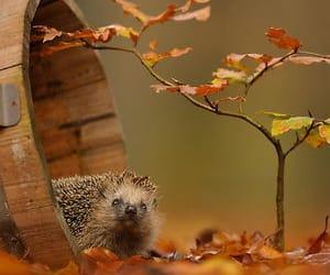autumn, animal, and hedgehog image