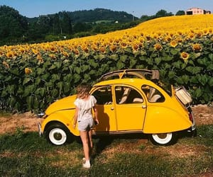 yellow, sunflower, and car image