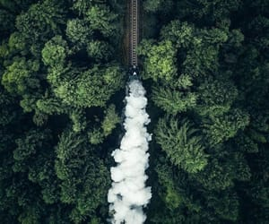 train, forest, and green image