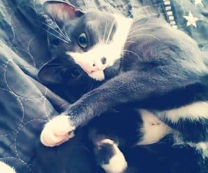 cat, my pet, and cute image