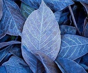 blue, natural, and photo image