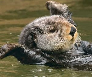 otter, sea, and swimming image