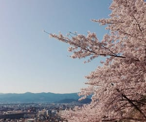 cherryblossom, japan, and kyoto image