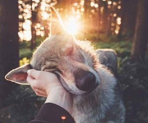dog, animal, and sun image