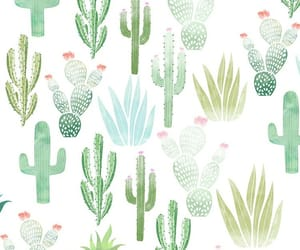 background, wallpaper, and cactus image