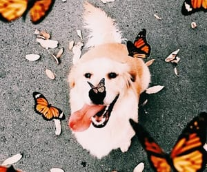 animal, butterfly, and dog image