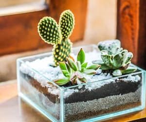 cactus, care, and green image