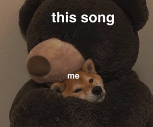 music, love meme, and song image