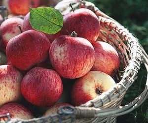 apples, autumn, and cozy season image
