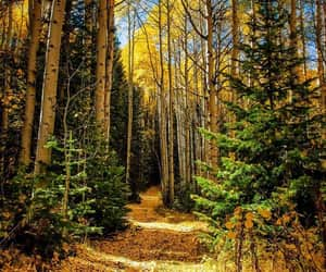 autumn, yellow, and forest image