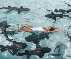 bahamas, sharks, and christinasplayground image