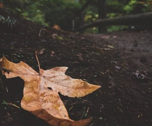 autumn, leaves, and scenery image