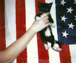 cat, usa, and flag image