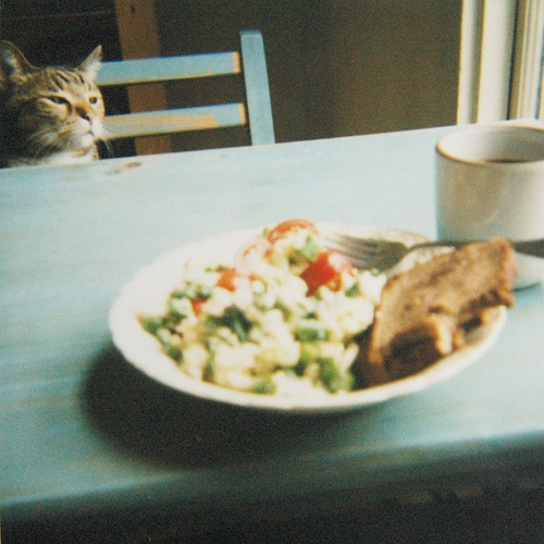 blur, breakfast, and cat image