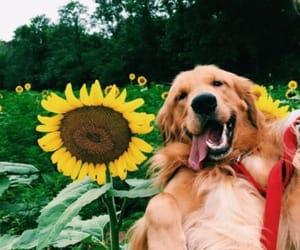 dog, sunflower, and animals image