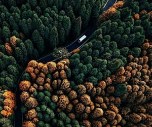 tree, wallpaper, and autumn image