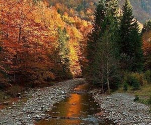 autumn, nature, and stream image