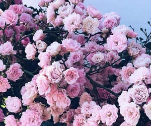 beauty, blossom, and flowers image