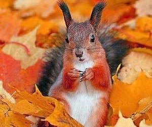autumn, squirrel, and animal image