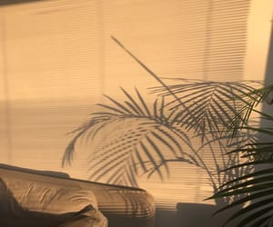 aesthetic, plants, and sun image