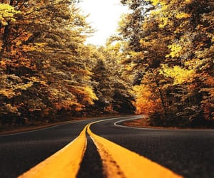 autumn, road, and yellow image
