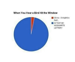 birds, funny, and harry potter image