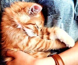 animal, cat, and sleep image