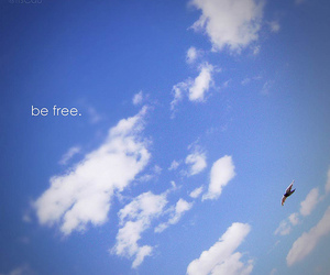 blue, free, and sky image