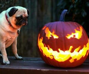 Halloween, dog, and pug image