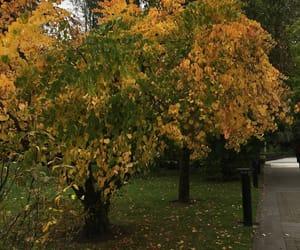 autumn, cork, and Halloween image