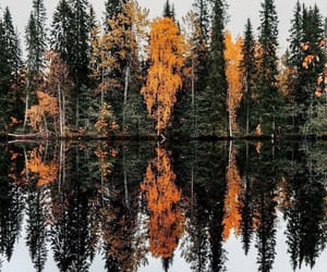 lake, tree, and autumn image