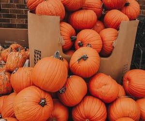 autumn, pumkins, and fall season image