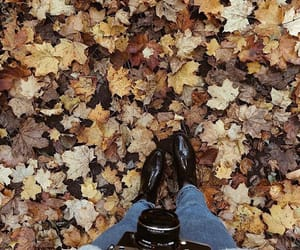 autumn, brown, and camera image