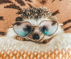 hedgehog, adorable, and cute image