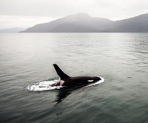 animal, nature, and ocean image
