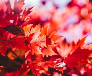 autumn and leafs image