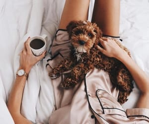 dog, coffee, and animal image