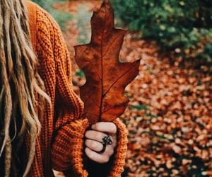 article, autumn, and beautiful image