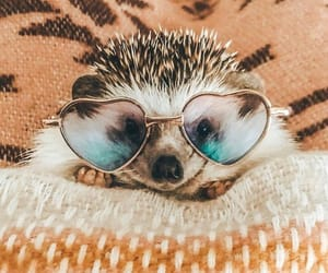 adorable, cozy, and glasses image