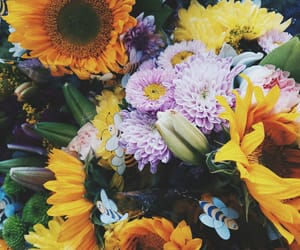 color, floral, and flowers image