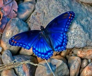 butterfly, nature, and blue image